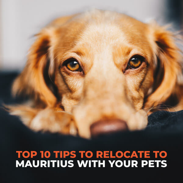 Top 10 Tips To Relocate To Mauritius With Your Pets