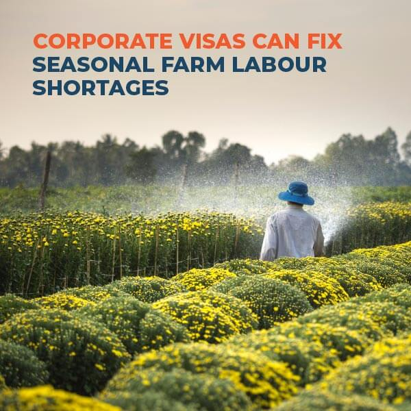 Corporate-Visas-Can-Fix-Seasonal-Farm-Labour-Shortages-XP